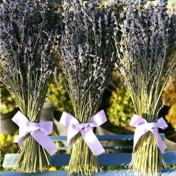 Bouquet fleurs de Lavande ruban bleu
