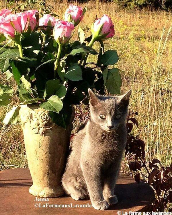 Jenna et les Roses