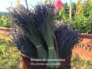 Bouquet fleurs de Lavande sans ruban